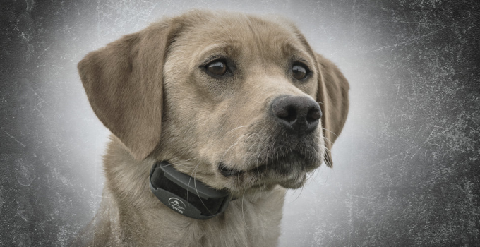Top 7 Best Dog Shock Collar Reviews 2019