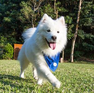 DOTT the smart dog tag Dog