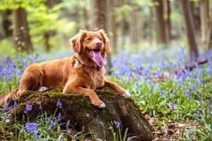 GPS Dog Training Collar