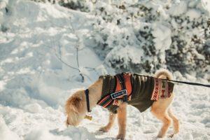 Best Dog Cooling Vest in 2020