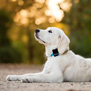 Best GPS Dog Training Collar