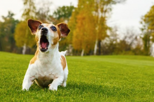 How Do I Stop My Dog from Barking