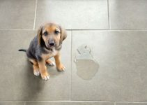Potty Train a Puppy