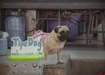 Top 3 Best Dog Diapers for Poop