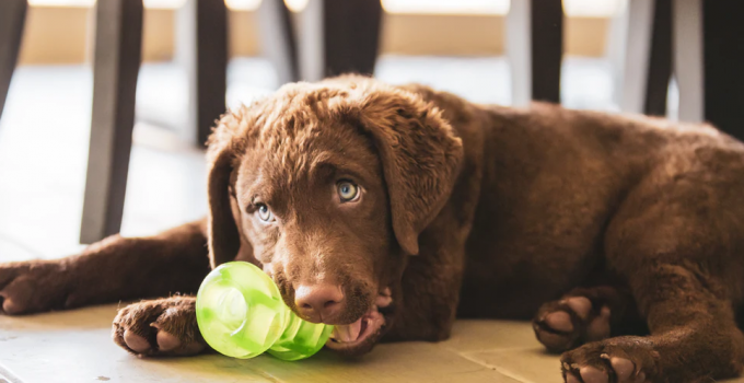 Top 4 Best Chew Toys for Puppies