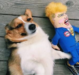 Trump Dog Chew Toys Reviews