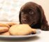 Best Treats To Use for Dog Training in 2020
