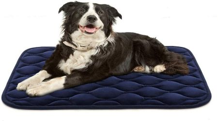 What Should Be in Mind While Selecting Dog Crate Pad?