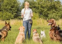 5 Tips for Choosing Treats for Your Dog Training