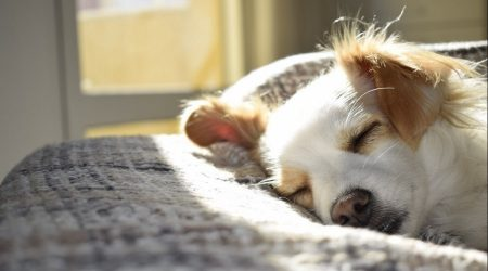 How to Calm Down a Dog – 5 Simple & Effective Tips