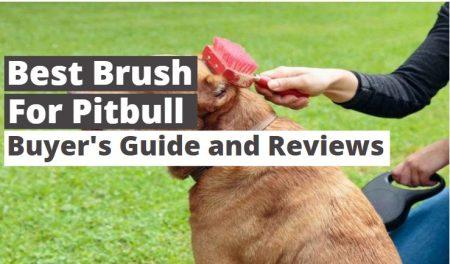 Best Brush for Pitbull –  Reviews & Guide