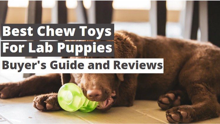 Top 4 Best Chew Toys for Lab Puppies 2021