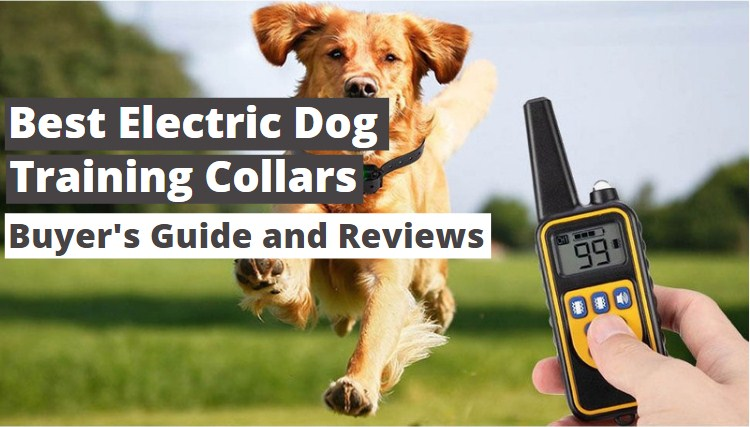 Best Electric Dog Training Collars 2021 – Usage Guide