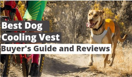7 Best Dog Cooling Vest Reviews in 2021
