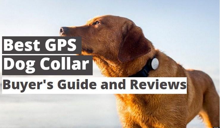 5 Best GPS Dog Collar Reviews 2021
