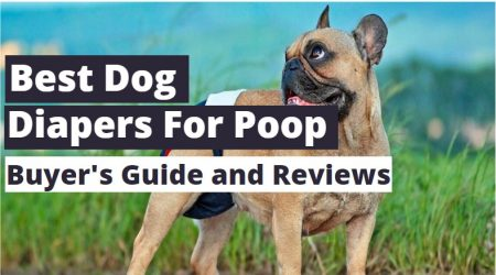 Top 3 Best Dog Diapers for Poop 2021 (Guide and Reviews)
