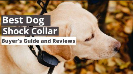 Top 7 Best Dog Shock Collar Reviews 2021