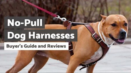 Best No Pull Dog Harness for Large Dogs (Guide 2021)