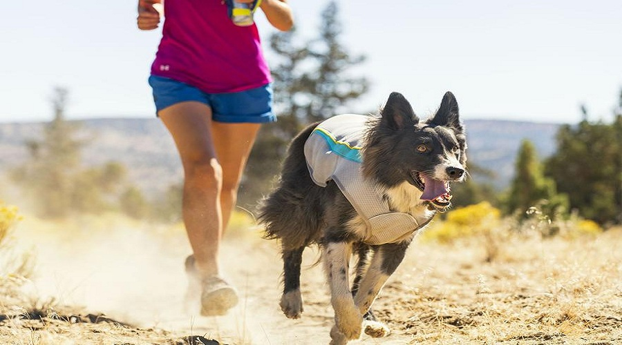 An Overview How Can Cooling Vest Can Protect Your Dog in Summer