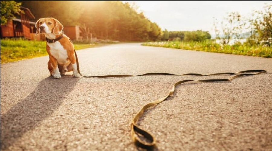 How to Find Your Lost Dog? ( 3 Simple Ways )