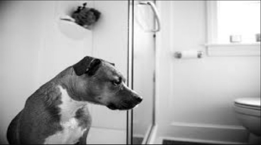 How to Potty Train a Puppy (13 Steps)