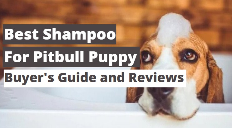 Best Shampoo for Pitbull Puppy 2021 ( Reviews & Guide )