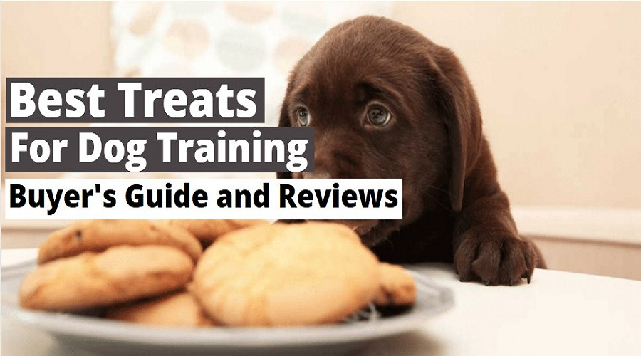 Best Treats To Use for Dog Training in 2021