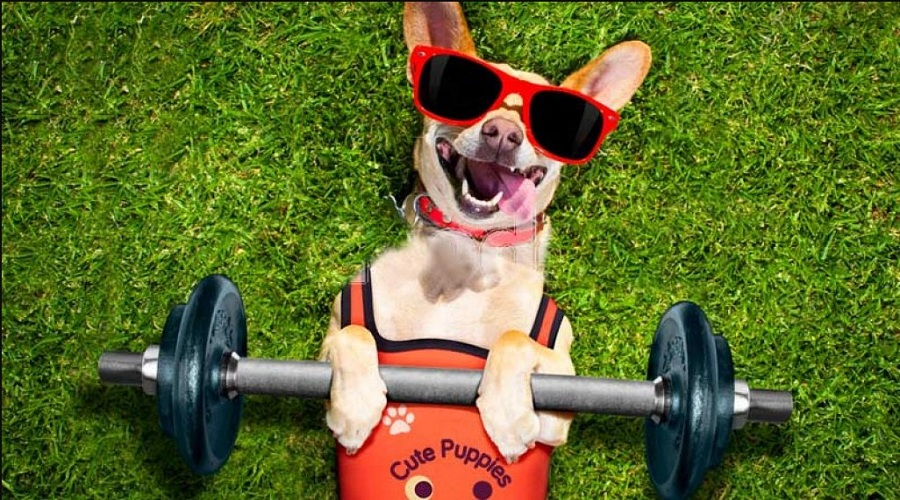 What Are My Dog's Exercise Needs?