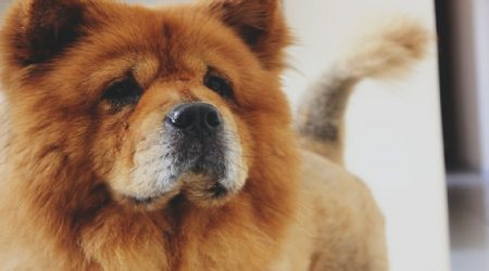 Top 4 Factors to Consider When Choosing the Right Dog Breed