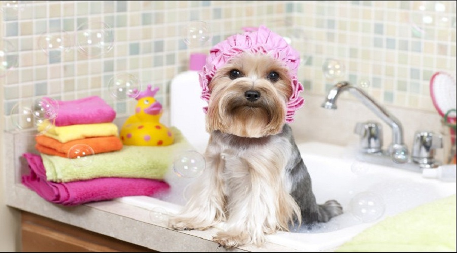 How to Groom a Dog 5 Pieces of Advice